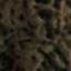 Wurzella